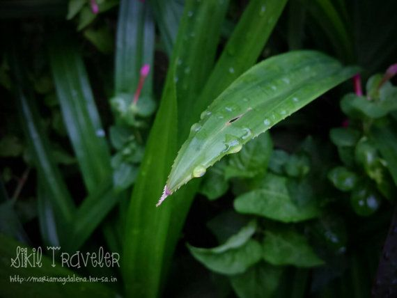 Water Drops On The Leaves Photostock. by SikilTraveler on Etsy