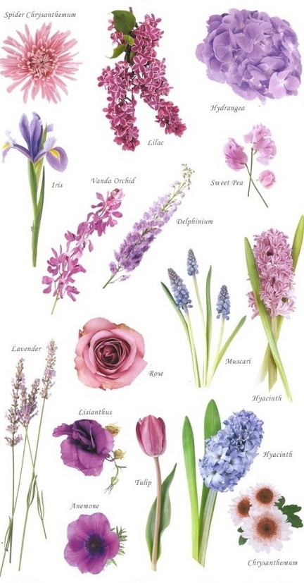 Specifically: lilac, hydrangea, sweet pea, spider mum, hyacinth, lavender
