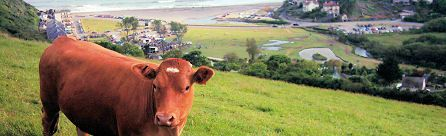 Trerieve Organic Farm Camping, Cornwall. We aim to provide quiet, relaxing family holidays on a working farm, with walks around the fields so you can enjoy nature and the fantastic scenery of south east Cornwall http://www.organicholidays.com/at/2420.htm