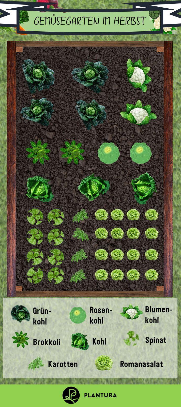 Gemüsegarten im Herbst: Der Sommer ist vorbei und du willst noch lecken …   – Herbst Garten