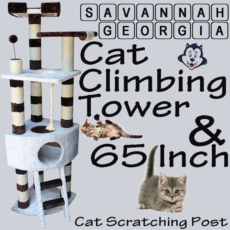 Savannah Georgia cat climbing tower and 65 inch cat scratching post #cattree, #catclimbingtree, #catclimbingtower, #catscratchingtree, #catscratchigpost, #65inchcattree, #65inchcatclimbingtree, #65inchcatclimbingtower,#65inchcatscratchingtree, #65inchcatscratchigpost, #SavannahGeorgiacatclimbingtower, #Savannahcatclimbingtower, #Savannahcatfurniture