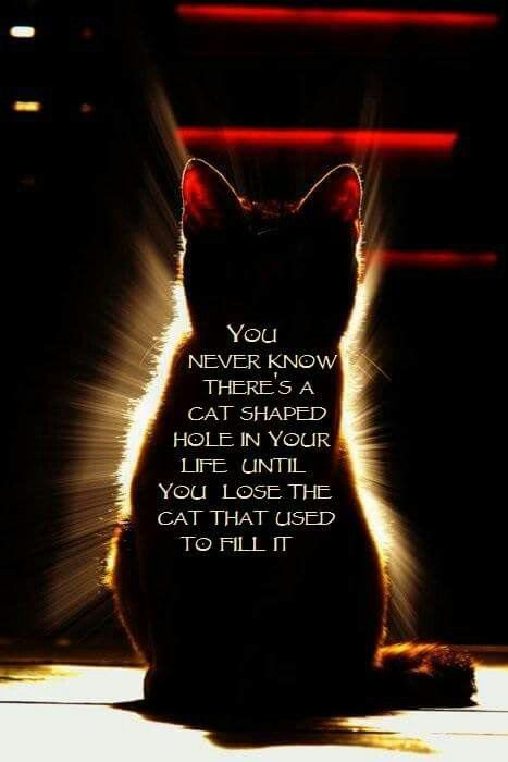 """You never know there's a cat-shaped hole in your life until you lose the cat that used to fill it."""