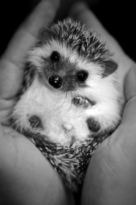 Black and white animal photo animal awesome baby black and white
