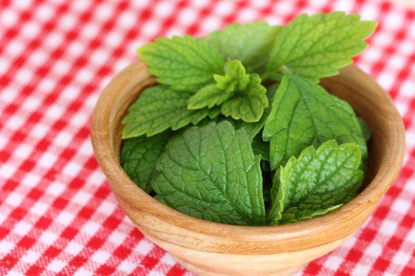 Stresszcsökkentés természetesen, gyógynövényekkel. A citromfű tea elkészítése: Minél kisebb adagokat alkalmazunk, annál hatásosabb nyugtató és altató. 1 csapott teáskanálnyi mennyiséget forrázunk le 2 dl vízzel, 15 percig lefedve ázni hagyjuk, majd leszűrjük. Ha 1-2 percig főzzük, akkor erősebb hatást vált ki. Ajánlott napi adagja 1 csésze tea (2 dl) reggel és este.