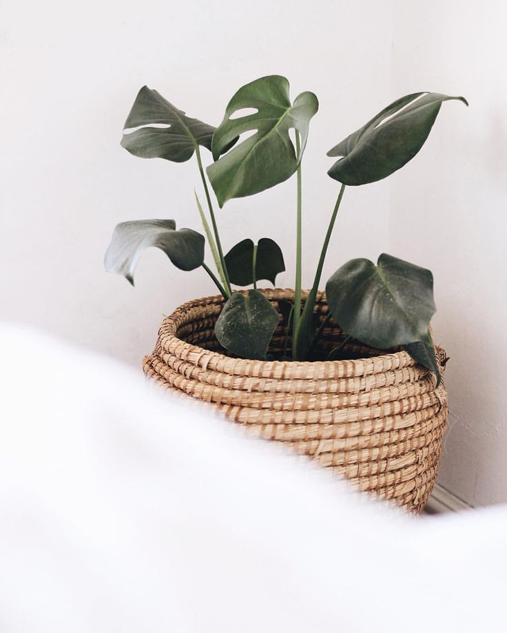 """Monstera Plant in a weaved basket pot plant holder - image by REBECCA ARENDSE (@theminimaleblogger) on Instagram: """"Repurposed our very old family laundry basket in to a Pinterest-inspired pot plant holder. On a…"""""""