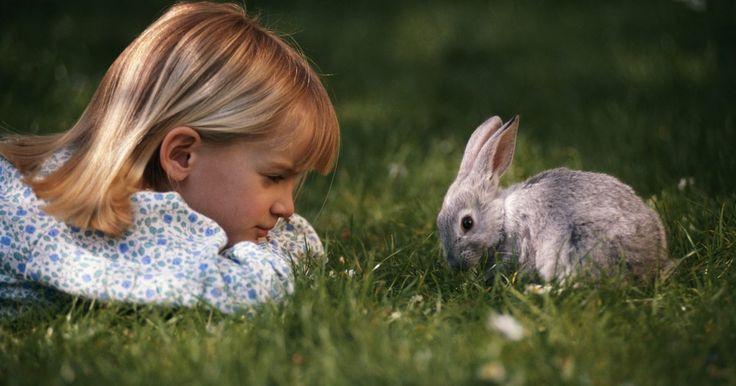 Cómo cuidar de un conejo mini rex. Esta raza tiene una esperanza de vida de 10 años y un peso promedio de 3 a 5 libras (1 a 2 kg), dependiendo del género. Está disponible en una variedad de colores que incluyen el negro, azul, gris chinchilla, chocolate, lila, ópalo, café oscuro, naranja y blanco, y es una mascota popular debido a su tamaño pequeño y naturaleza dócil. Cuidar de un ...
