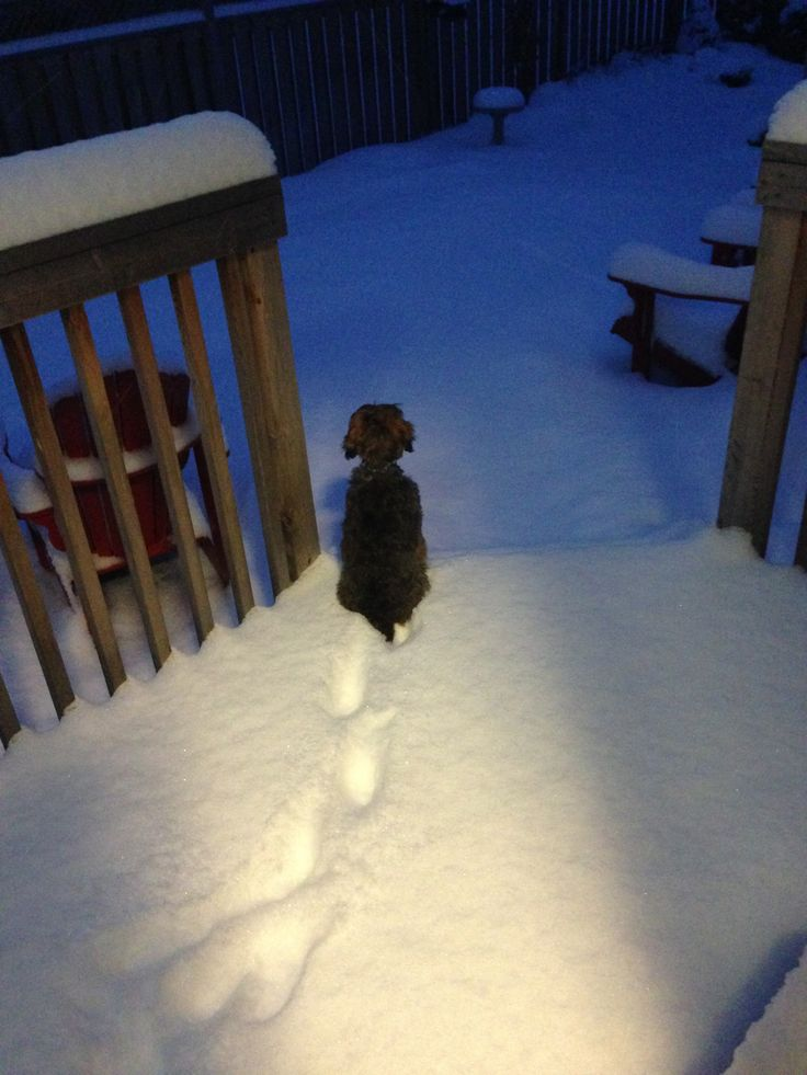 It has been a long, long winter #cold #snow #cockapoo