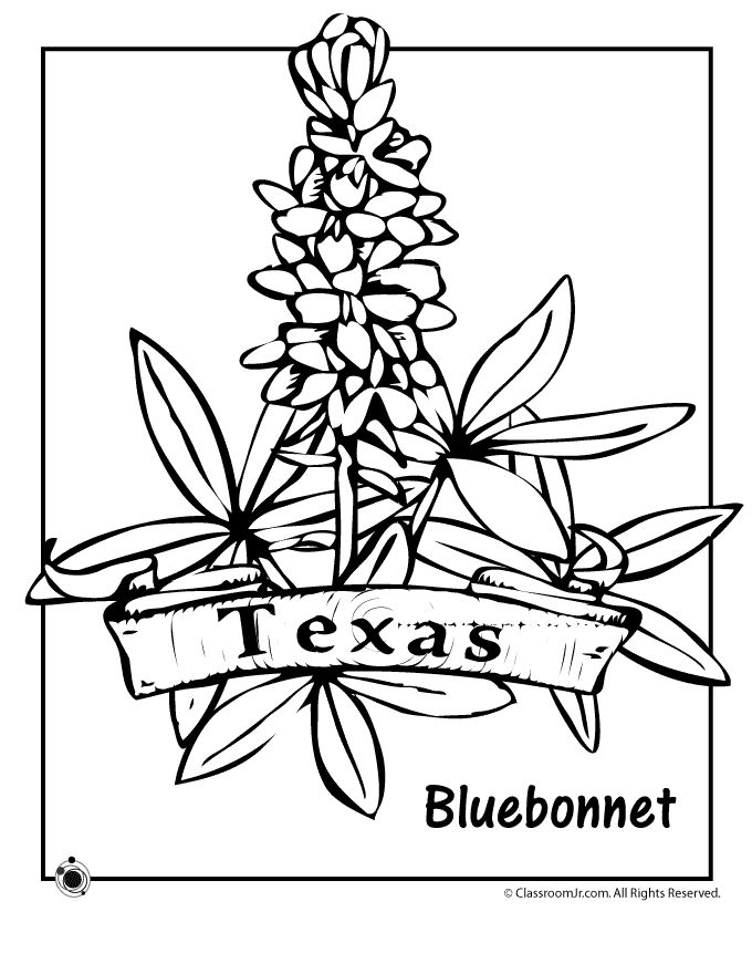 Coloring Pages For State Flowers : State flower coloring pages texas schooled