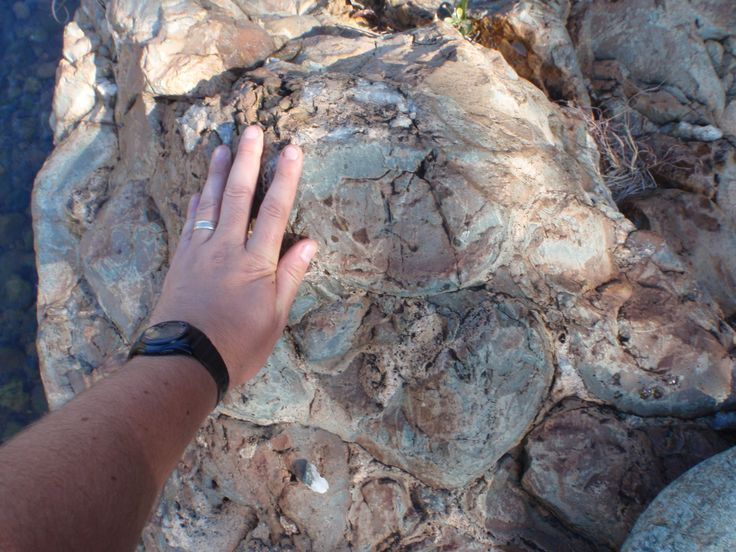 Pillow lavas. Barberton Mountainland, South Africa. Picture taken by Jackie Gauntlett.