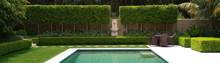 Pleached Ficus hillii with Trachelospermum jasminoides create a formal backdrop to this swimming pool