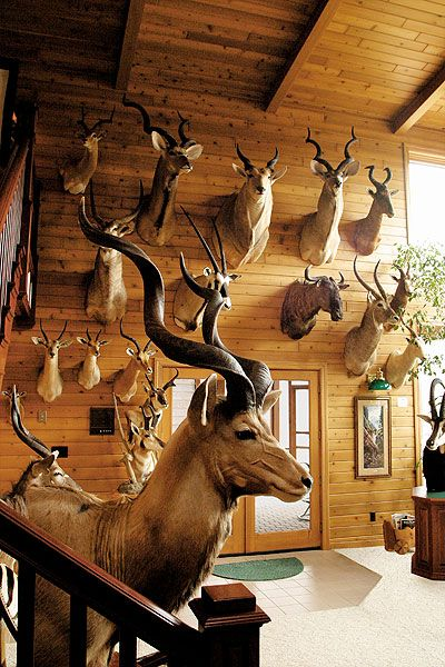 Beautiful Trophy Room Filled With Mounts Hunting And Taxidermy