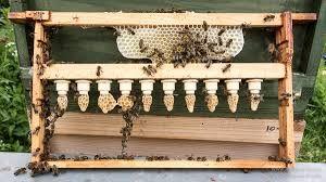 Σπάνια Μέλισσα: ΒΑΣΙΛΟΤΡΟΦΙΑ βήμα-βήμα από έμπειρο μελισσοκόμο