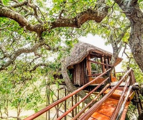 Pezulu Tree House Game Lodge, Limpopo