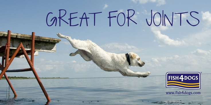 Omega 3 found in Fish4Dogs can help improve alleviate some joint conditions