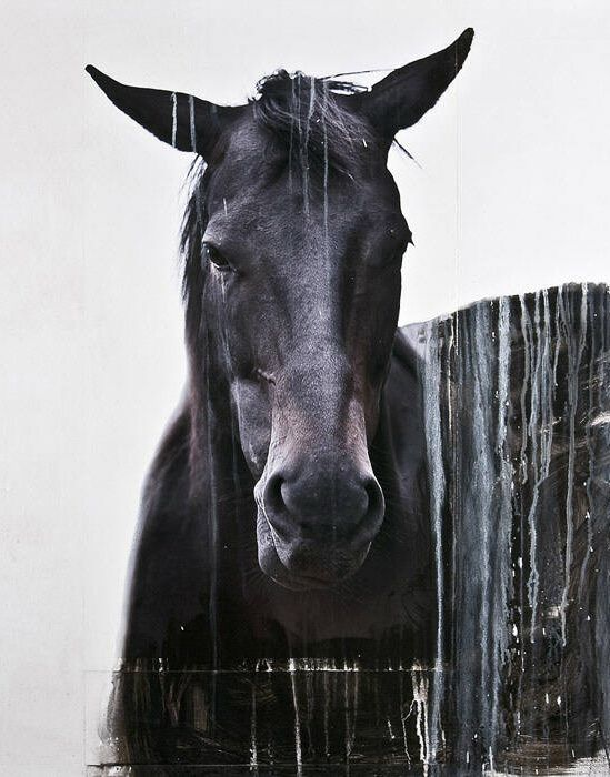 .: Beautiful Horses, Animal Art, Andre Petterson, Mixed Media, Stil Inspiration, Hors Photos, Off Ears, Rid Off, Black Hors