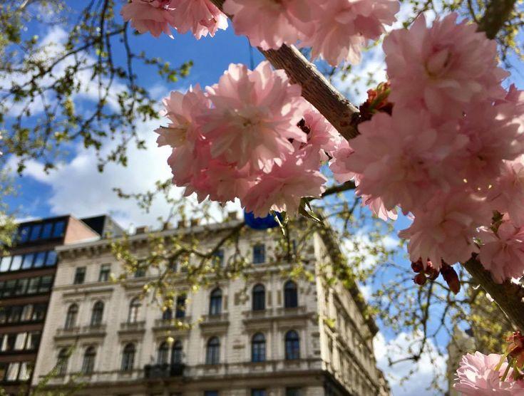 március+31.+–+április+30-ig+a+Vörösmarty+téren    A+Budapesti+Fesztivál-+és+Turisztikai+Központ+(BFTK)+2017.+március+31.+–+április+30.+között+Budapesti+Tavaszi+Vásárt+rendez+a+Vörösmarty+téren.  Sokéves+tapasztalat,+hogy+a+tavaszi+és+adventi+vásár+a+turisták+és…