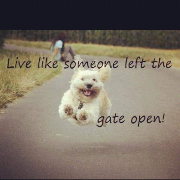 Live Like Someone Left The Gate Open Quote: 10 Best Images About Live Life Like There's No Tomorrow On