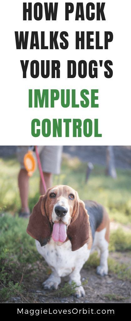 Pack Walks Help Dogs With Lack Of Impulse Control Dogs Dog