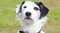 Sykes the Jack Russell, seen here with Sarah Barnaby (Fiona Dolman). Description from pinterest.com. I searched for this on bing.com/images