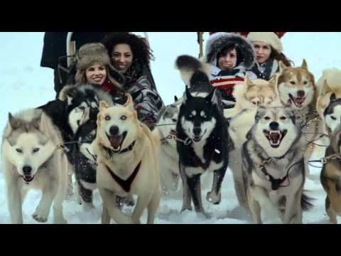 DOG SLEDDING. With world class snow and breathtaking landscapes this winter experience is a must for any Alberta traveler.