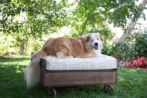 2012 Saint Roch Dog Beds eclectic pet accessories