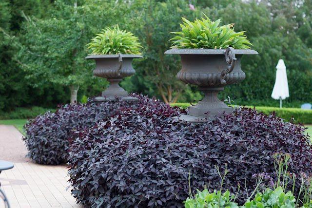 The Bells garden