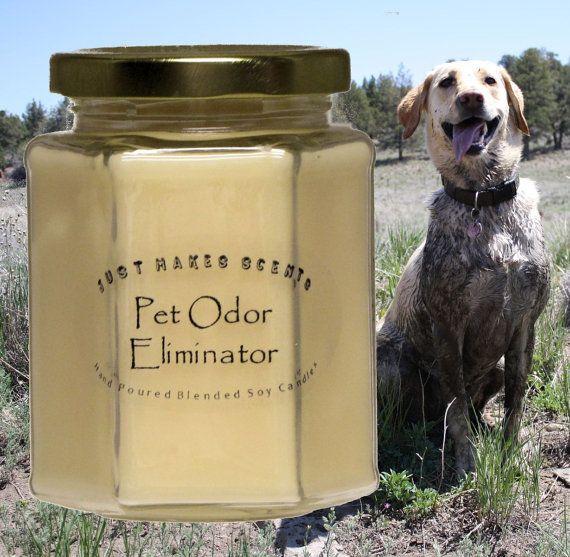 Best 25 Pet Odor Eliminator Ideas On Pinterest Odor
