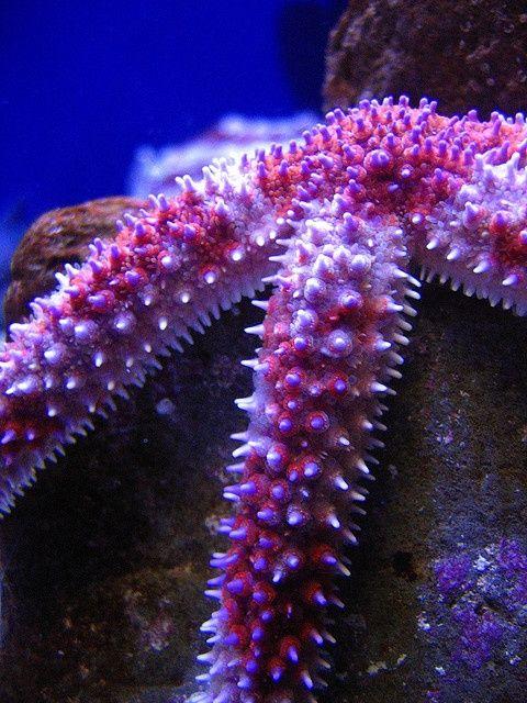 beautiful star fish love pinterest. Black Bedroom Furniture Sets. Home Design Ideas