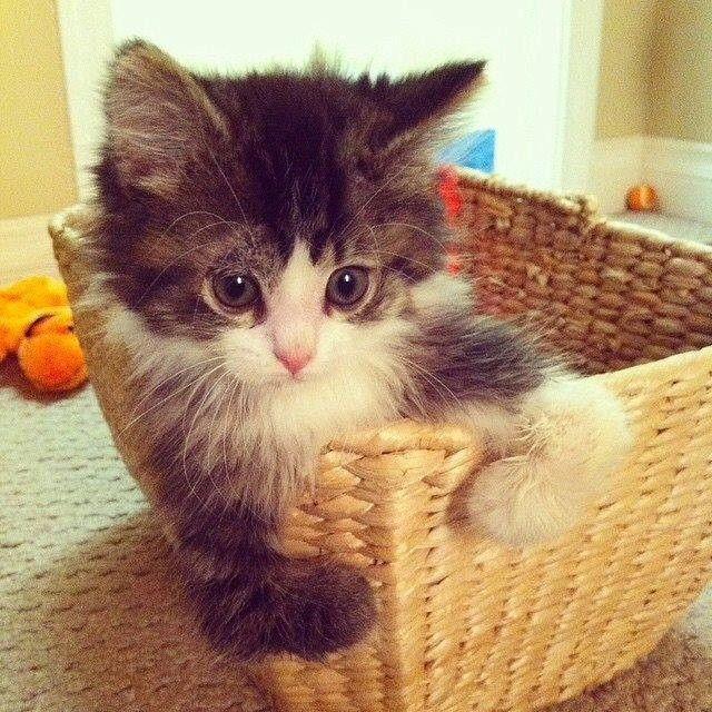 10 Top verschiedene Katzenrassen und verschiedene Katzenpersönlichkeiten
