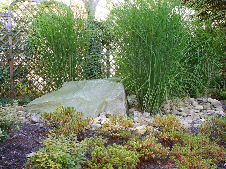 Stauden + Gräser + Farne Garten Pinterest Gräser, Stauden - garten mit grasern und kies
