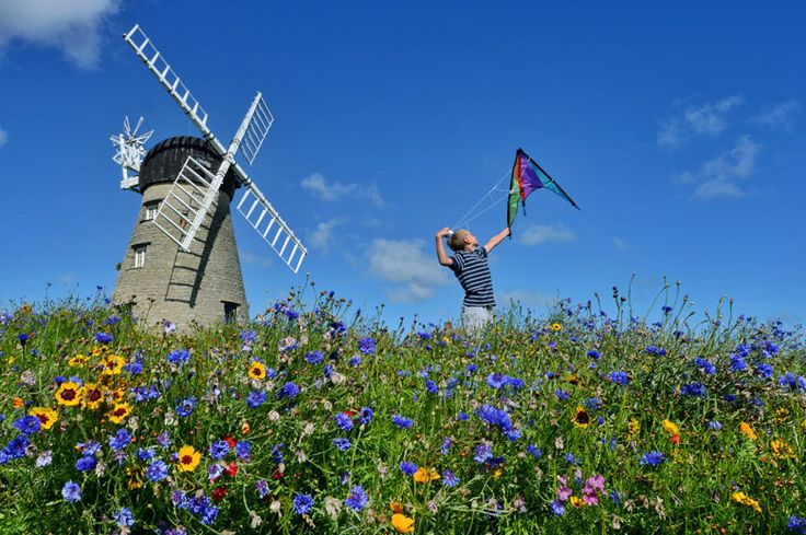 A sea of colour encircles this disused windmill in South Shields, after South Tyneside council decided to save £300,000 by replacing costly bedding plants with wild flowers