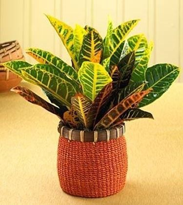 le piante   Piante da appartamento - Piante da interno - piante appartamento