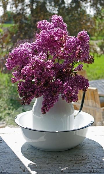 lilacs in white pitcher one of my fantasies for the bathroom in spring