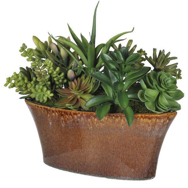 Ordinary Indoor Plants Online #13: Indoor Plants | Wayfair - Buy Indoor Plants Online ❤ Liked On Polyvore Featuring Home,