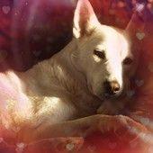 my wonderful dog Safira.