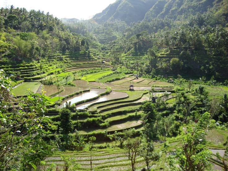 Sawah (rice terraces) near Amed, east Bali.  (JAS, 2001)
