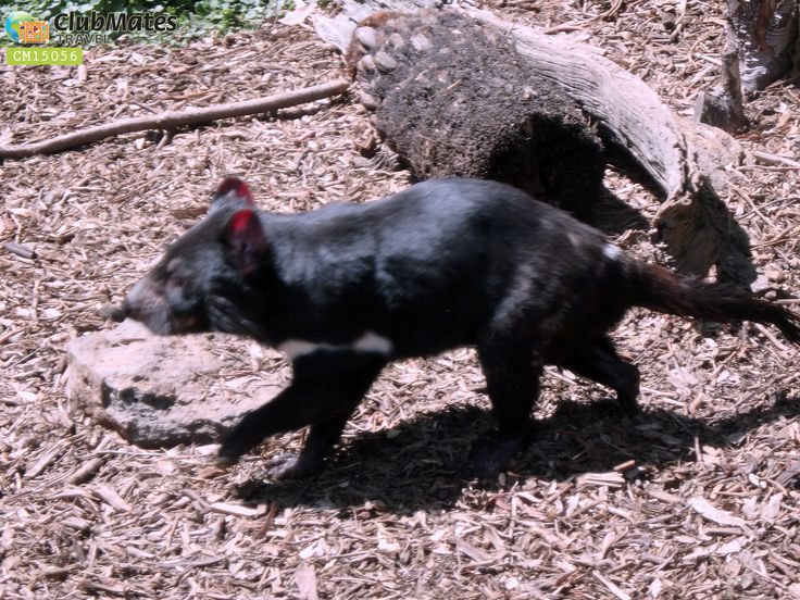 @ Ballarat Wildlife Park