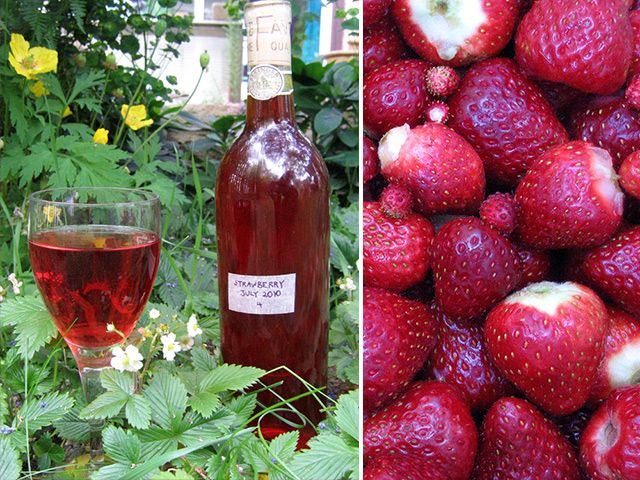 DIY Strawberry Wine Recipe #diy #wine #dan330 http://livedan330.com/2015/02/28/diy-strawberry-wine/