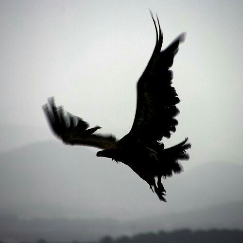 I want to be reincarnated as a Raven when I die.