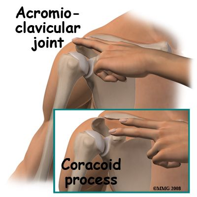 coracoid process vs acromion process surface anatomy - Google Search