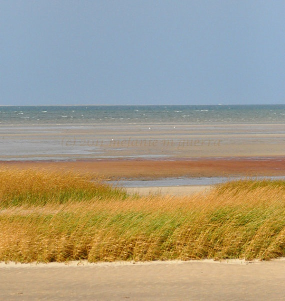 Hotels In Cape Cod On Beach: 521 Best New England Images On Pinterest