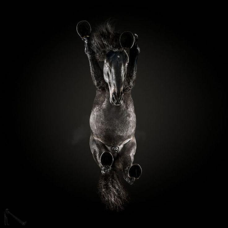 Auffällige Fotos zeigen, wie Pferde von unten aussehen – #fotografiedessous