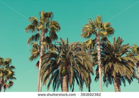 Palm Trees Sunset La Stock Photography   Shutterstock