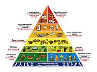 Пирамида питания (пищевая пирамида)