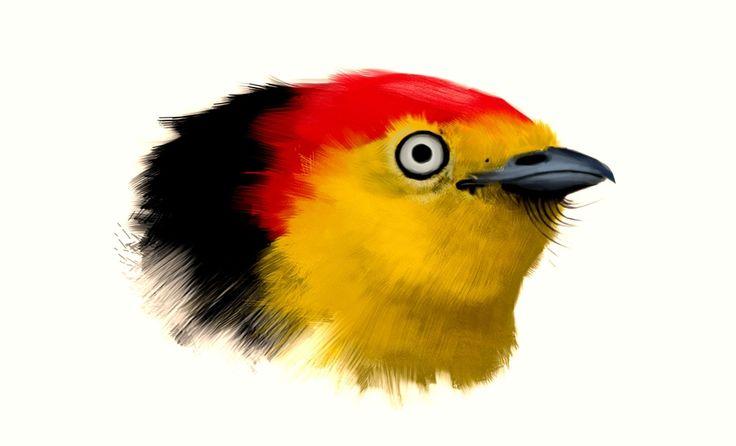 Scientific illustration · Birds on Behance