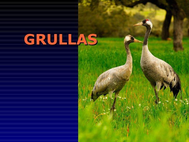 GRULLAS