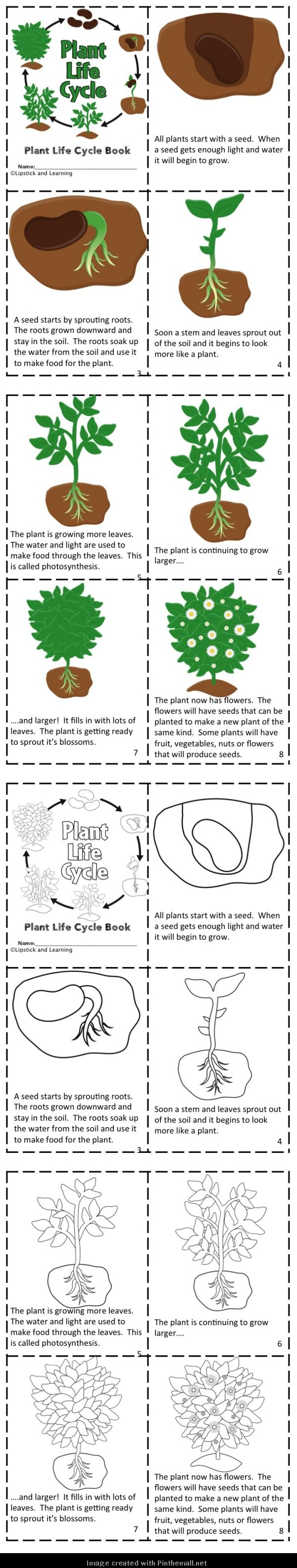 PLANT LIFE CYCLE Mini Reader, Vocabulary Cards, & Foldable ...