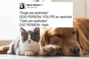 18 Perfect Tweets About Cat People Vs. Dog People