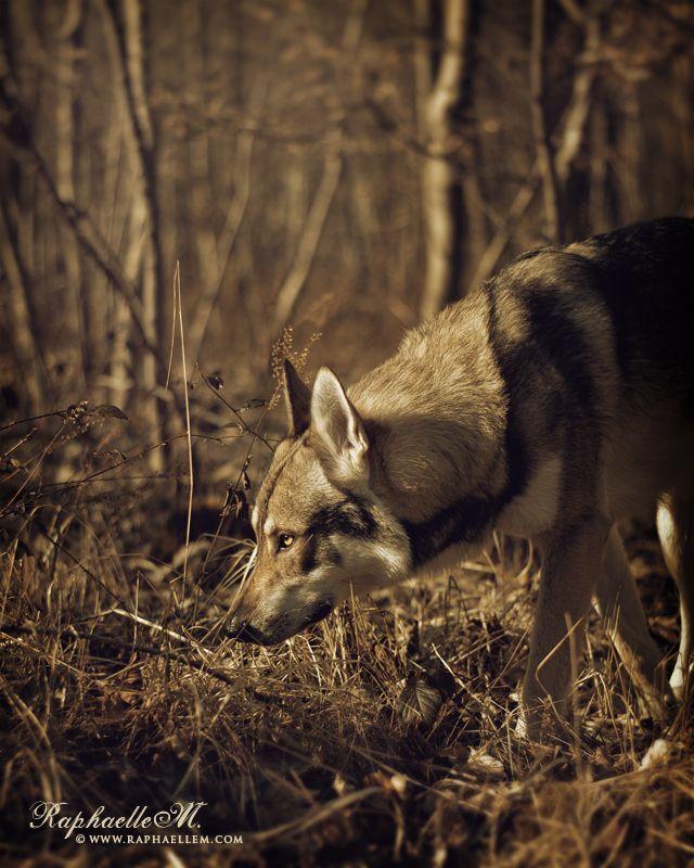 The Hunter by Raphaelle Monvoisin on 500px