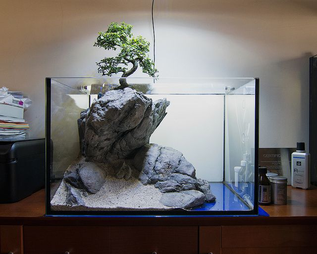 FAAO - Aquascaping: Use your imagination! 60L New layout
